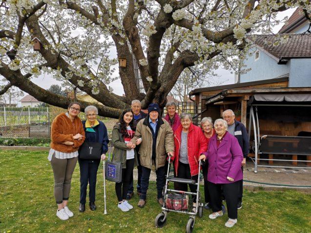 Traditioneller Kirschblütenbesuch bei den Pitlik´s